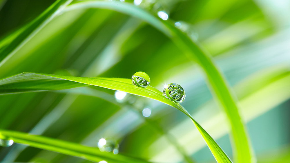 Wellspect About Close up of water dew droplets on fresh green grass